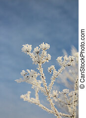 Plant in hoarfrost against the sky