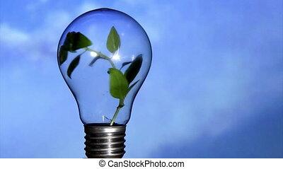 Plant in light bulb, sky 2