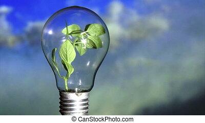 Plant in light bulb, sky - Plant in light bulb, rotate. Blue...