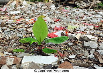 plant in pollution