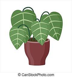 Plant in pot on white background. Vector illustration
