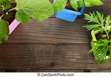 Plant in pot on wooden background