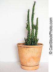 Plant in Terracotta Pot