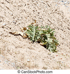 plant in the desert