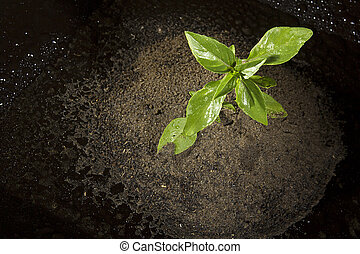 Plant in the ground