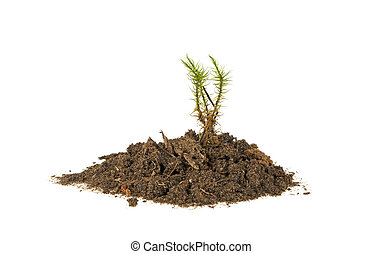 plant in the ground, isolated on a white background
