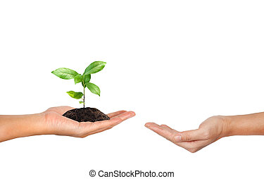 Plant in the hand isolated on white background