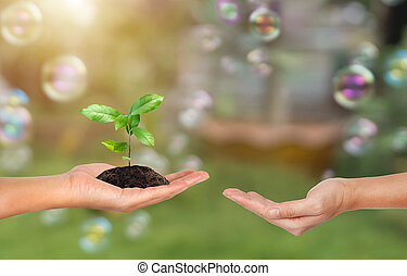 Plant in the hand on green nature and soap bubble background