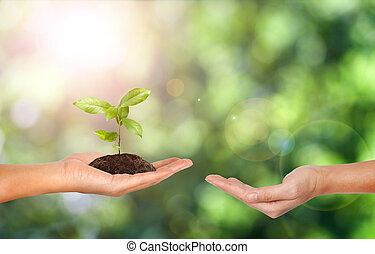 Plant in the hand on green nature background