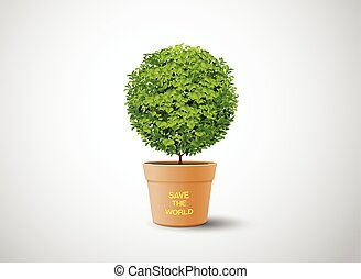 plant in the pot