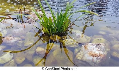 Plant in the Water - Close-up Of A Plant And Pebbles In The...