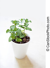 plant in white pot isolated