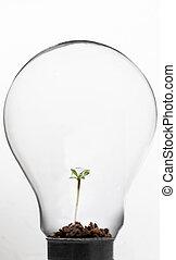 Plant inside light bulb