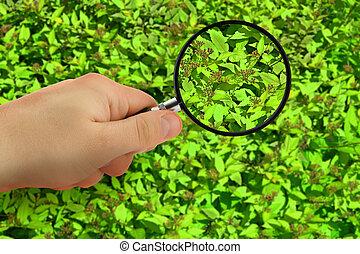 plant inspection