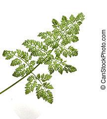 plant isolated on white background