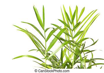 Plant isolated on white background.