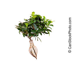 Plant isolated on white