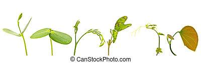 plant, jonge, gevarieerd, achtergrond, groen wit