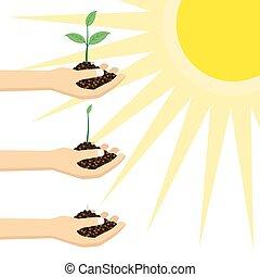 plant, jonge persoon, sun., vasthouden, onder