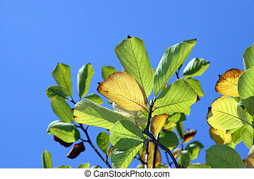 plant leaves in the sky background