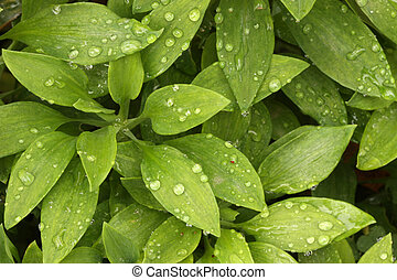 Leaves with Morning Dew