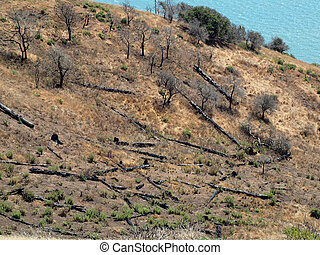 Plant Life returning to burnt hillside next to shore on ...