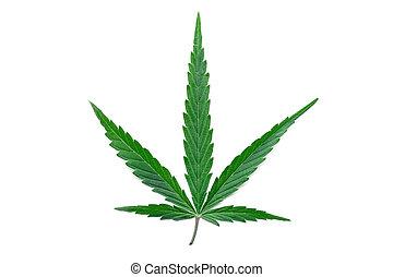 plant., médico, sativa., folha, legalize., branca, isolado, cannabis, experiência., cânhamo, erva daninha, verde, marijuana