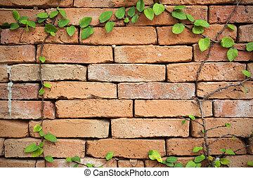 plant, muur, creeper, groene achtergrond, baksteen