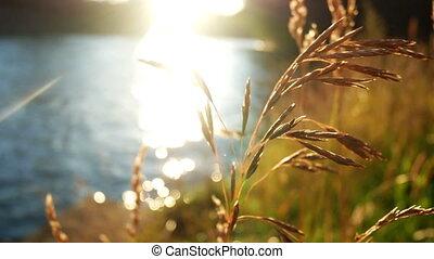 Plant nature autumn sunset - Evening sunset at autumn in the...