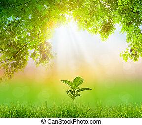 plant, natuurlijke , op, groene achtergrond, groeiende