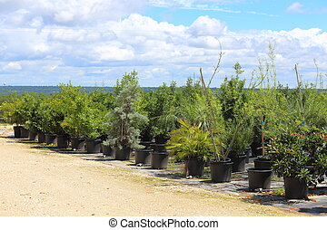 Plant Nursery - A Plant nursery that has different species...