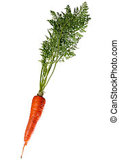 Plant of carrots on white