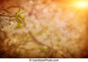 plant of cherry tree on blurred background in sunrise foggy gard