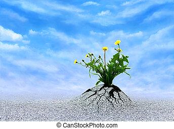 Plant of Faith, Hope & Love