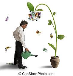 Plant of money