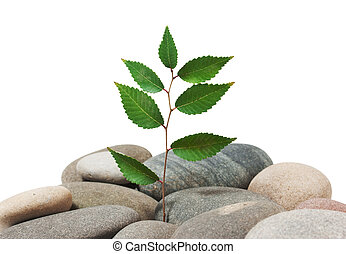 plant on a pile of stones