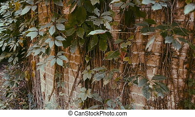 plant on a wall struggle for survival