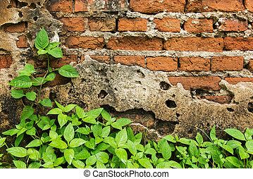 Plant on an old brick wall