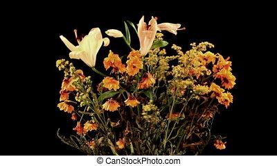 plant on black background