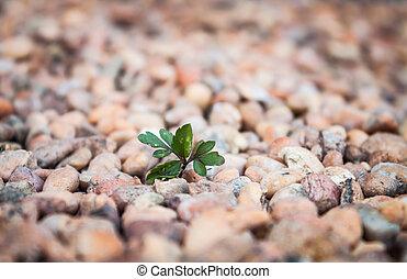 Plant on brown pebble