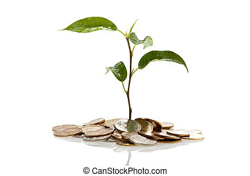 Plant on coins growing