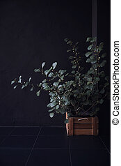 plant on flowerpot in black background