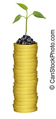 Plant on gold coins stack