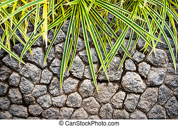 plant on stone wall background