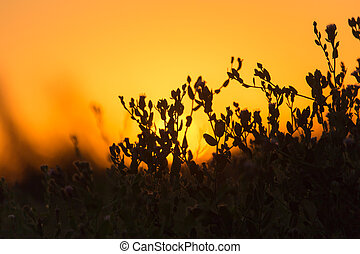 plant on the background of sunset