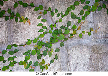Plant on the crack cement wall.