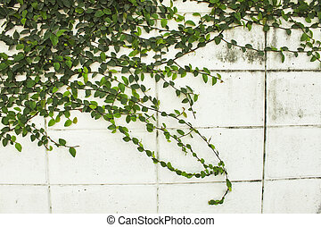Plant on the wall
