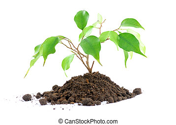 Plant on White - Plant and earth on white. Plant a plant and...