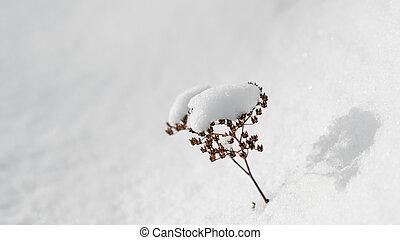 Plant on white snow
