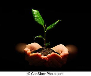 plant - Hands holding sapling in soil
